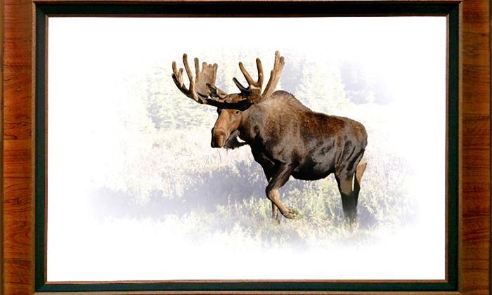 XNPJ22  AMERICAN BISON  (Bison bison)Wind Cave National Park, South Dakota