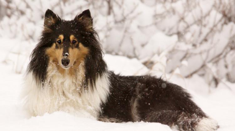 GS060  FAMILYDiana in the snow; Allenspark, Colorado