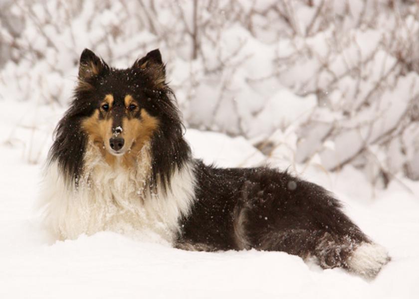 GS060  FAMILY Diana in the snow; Allenspark, Colorado